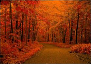 Autumn Season Article